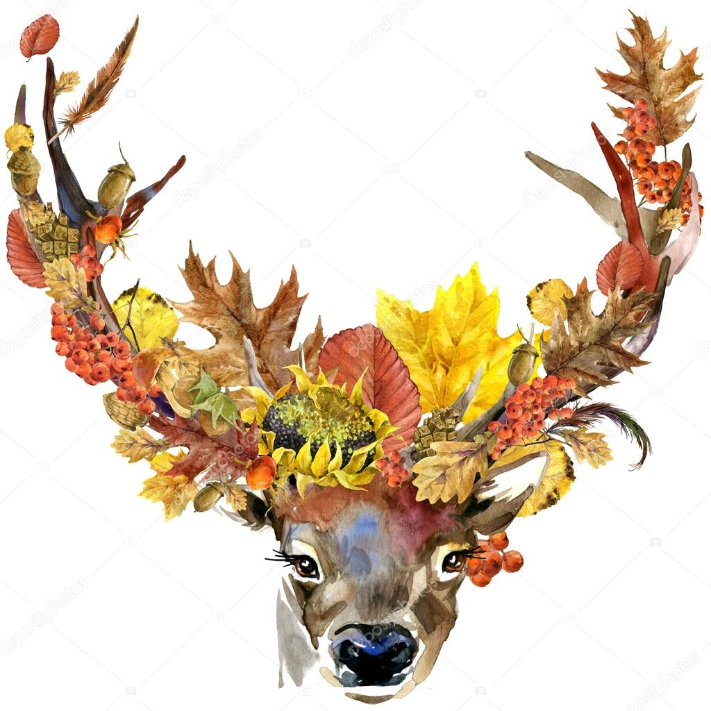 depositphotos 85870564 stock photo forest animal roe deer autumn